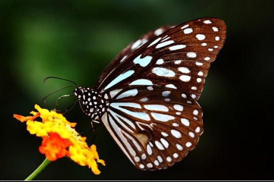 要制作蝴蝶标本,首先要准备以下用具:-梦幻蝶阁 彩蝶纷飞